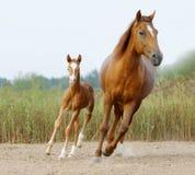 Maternity Stock Photography