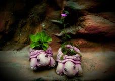 Materpiece черепахи Стоковая Фотография