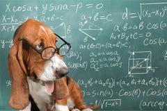 mathe lizenzfreies stockbild