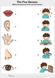 Mathe das Bild zu den korrekten fünf Richtungen - Note, Geschmack, Anhörung, Anblick, Geruch Lizenzfreies Stockfoto
