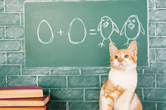 Mathematics. Funny red cat studying mathematics Royalty Free Stock Images