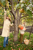 Mather and son gather apples in autumnal garden. Day Stock Photo