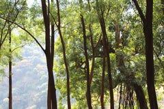 Matheran dżungle Obrazy Stock
