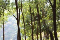 Indian Jungles. Tress and shrubs with cool feeling Stock Images