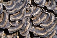 Matière inflammable 2 de champignons de couche Photographie stock