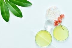 Matières premières de soins de la peau, produit de beauté naturel Photographie stock libre de droits