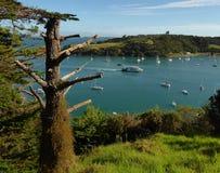 Matiatia fjärd på den Waiheke ön i Nya Zeeland royaltyfria bilder