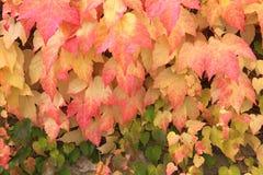Matices del otoño Foto de archivo