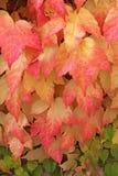 Matices del otoño Imagen de archivo libre de regalías