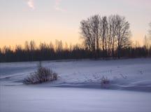 Matin au-dessus d'un champ neigeux avec des arbres photos libres de droits
