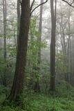 Matin automnal brumeux et forêt normale d'aulne Photos libres de droits
