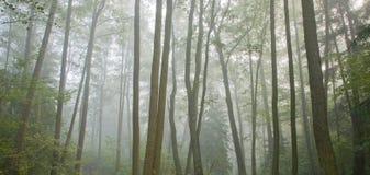 Matin automnal brumeux et forêt normale d'aulne photographie stock