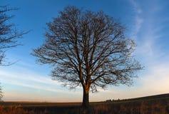 Matin avec l'arbre Photographie stock libre de droits