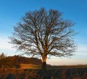 Matin avec l'arbre Photographie stock