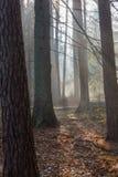 Matin brumeux automnal dans la forêt Photographie stock libre de droits