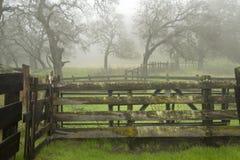 Matin brumeux, barrières de ranch et chênes image stock