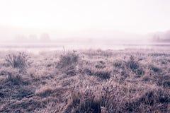 Matin brumeux d'Arly sur le rivage du miroir de lac photos stock