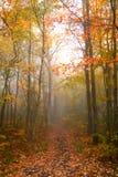 Matin brumeux d'automne image libre de droits