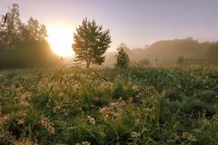 Matin brumeux dans la forêt Photos libres de droits