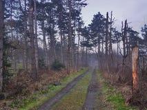 Matin brumeux dans la forêt Photo stock