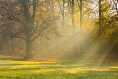 Matin brumeux dans la forêt Photo libre de droits