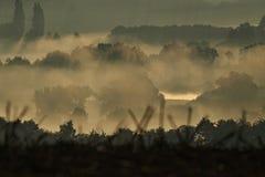Matin brumeux dans la forêt d'été Images stock