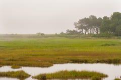 Matin brumeux dans Maine côtier Image stock