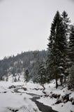 Matin brumeux de l'hiver image stock
