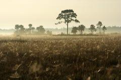 Matin brumeux de l'hiver dans les marais Image stock