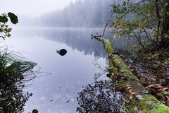 Matin brumeux de lac Photo stock