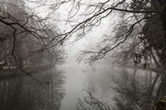 Matin brumeux de lac Image libre de droits