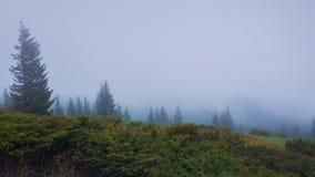 Matin brumeux en montagnes carpathiennes avec la forêt conifére dans la brume Paysage brumeux saisonnier sombre photo libre de droits