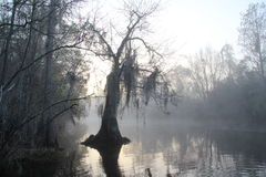 Matin brumeux - marais d'Okefenokee - la Géorgie photos stock