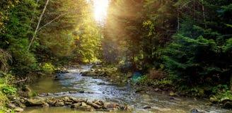Matin brumeux merveilleux sur la rivière de montagne rees colorés rougeoyant au soleil photos stock