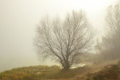 Matin brumeux sur le lac Arbres et herbe près de l'eau images stock