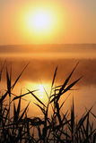 Matin brumeux sur une petite rivière Photo libre de droits