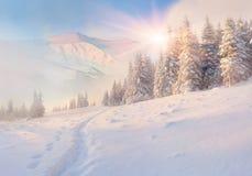 Matin coloré d'hiver en montagnes image libre de droits