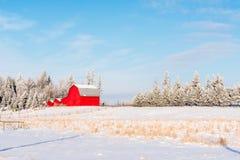 Matin croquant avec la neige rouge de grange et d'hiver Image libre de droits