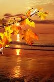 Matin d'automne Photographie stock libre de droits