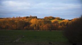 Matin d'automne au-dessus des sud Limbourg de pays de colline Photo libre de droits
