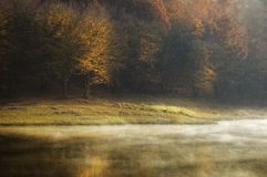 Matin d'automne au lac près d'une forêt avec le regain Image libre de droits