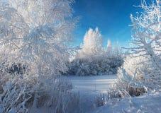 Matin d'hiver d'espace libre de Cristal Photo stock