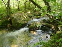 Matin dans la forêt Photographie stock libre de droits