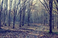 Matin dans la forêt d'automne Photographie stock libre de droits
