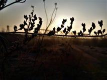 Matin dans le désert photographie stock libre de droits