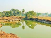 Matin dans le village quand l'eau a tourné le miroir Photo libre de droits