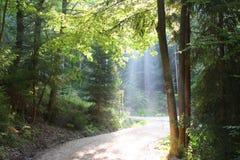 Matin dans les bois Images libres de droits