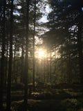 Matin dans les bois Photos libres de droits