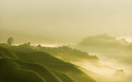 matin de brouillard photos libres de droits