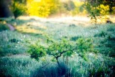 Matin de champ d'été images stock